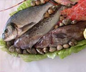 Photograph of an assortment of fresh fish